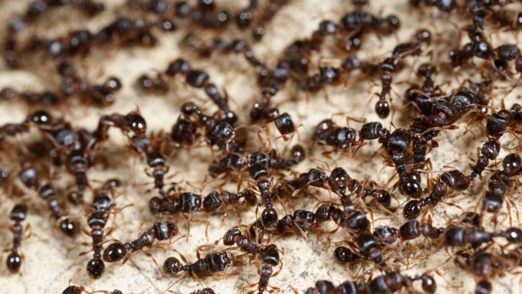 Was hilft gegen Ameisen? 14 Tipps, um das Ungeziefer loszuwerden