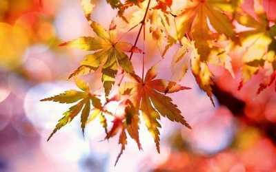 Wenn Blätter fallen – die besten Tipps für Gartenbesitzer
